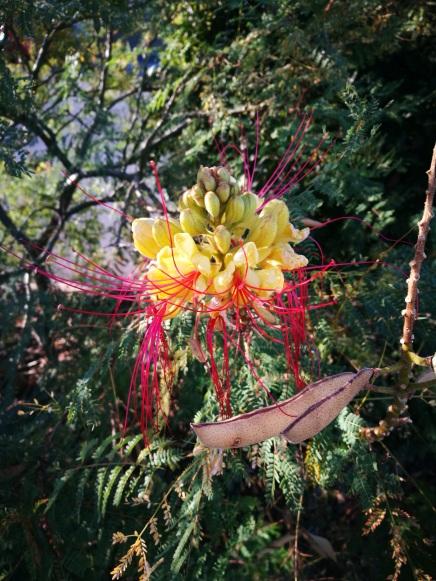 extraterrestrial flower